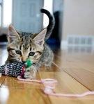 Котёнок с самодельной мышкой