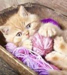 Кошка играет с нитками