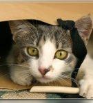 Кошка играет с пакетом