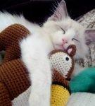 Кошка с вязанной игрушкой