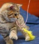 Кошка играет с удочкой