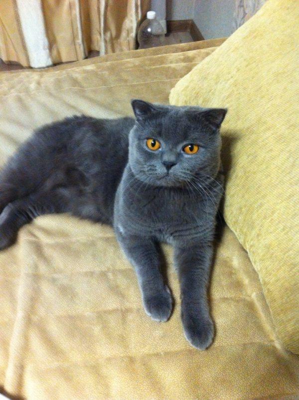 Двухлетний кот