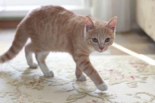 Полугодовалый котёнок