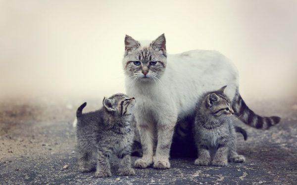 Кошка стоит с котятами
