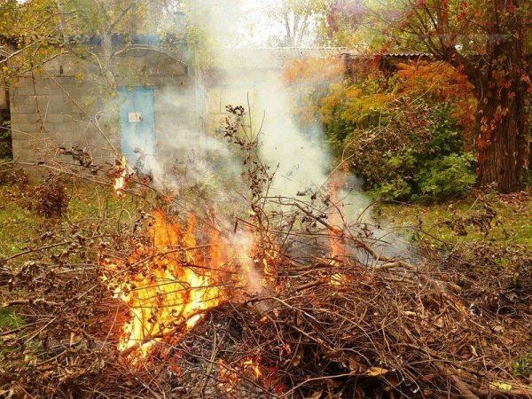 Сжигание растительных остатков