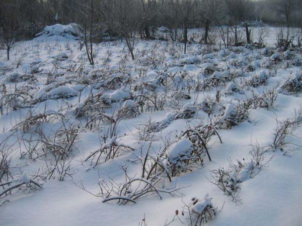 Малинник зимой