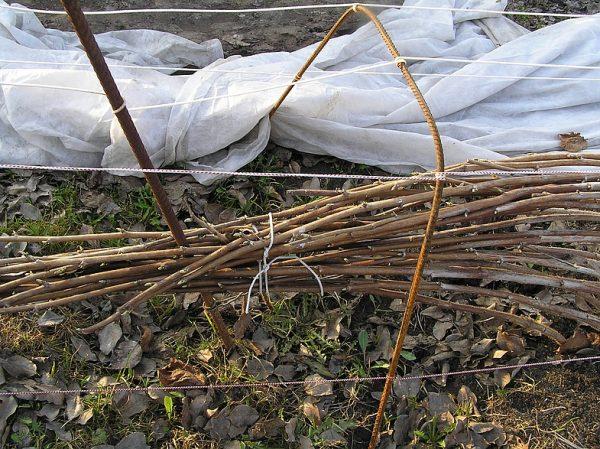 Привязывание веток малины к проволоке