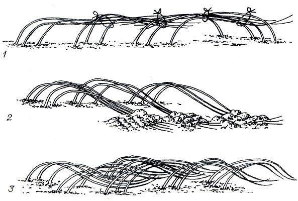 Схемы пригибания малины на зиму