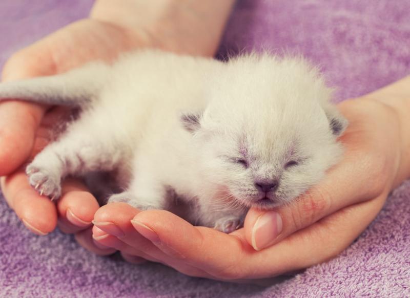 Как правильно принимать роды у кошки