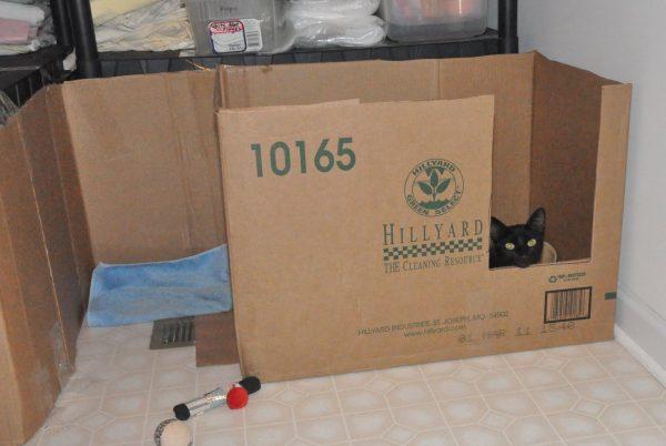 Гнездо для беременной кошки