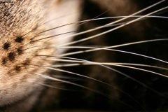 Усы кошки