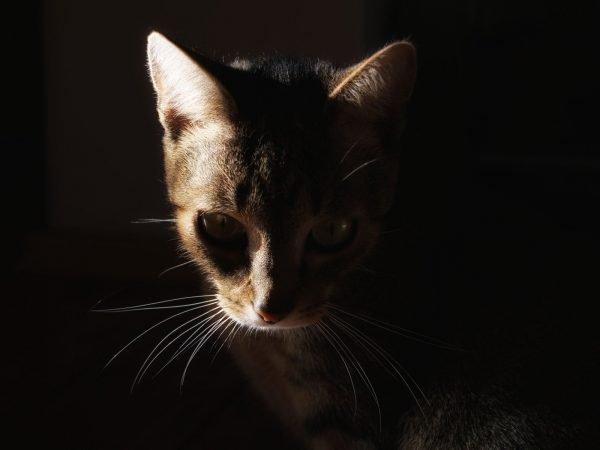 Кошка в темноте
