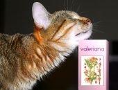 Кот с валерьянкой