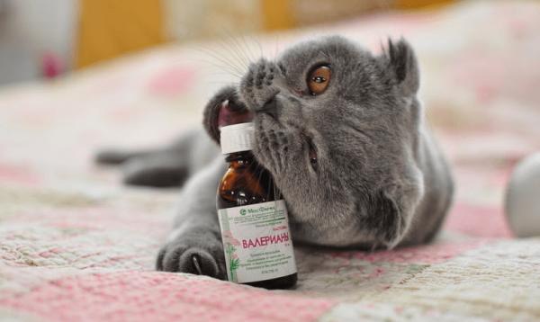 Кот с пузырьком валерьянки