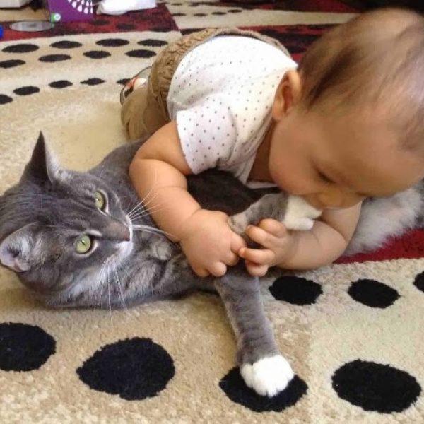 Ребёнок играет с кошкой