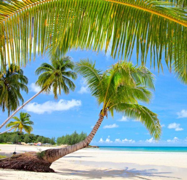 Пляж, пальмы
