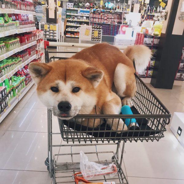 Рыжий пёс в магазине