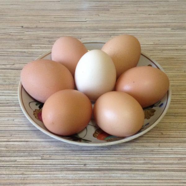 Яйца с белой и коричневой скорлупой лежат на тарелке