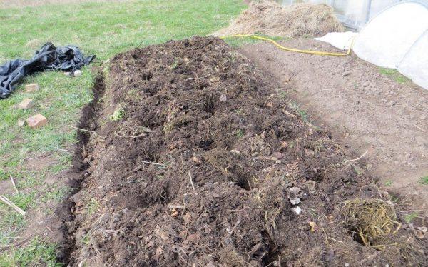 Удобрения для картофеля при посадке какое лучше вносить чем удобрять