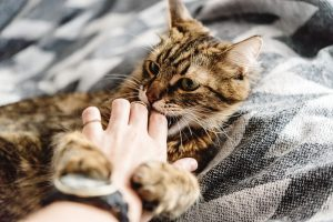 Кусающаяся кошка