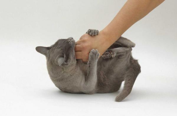 Отпихивающая руку кошка