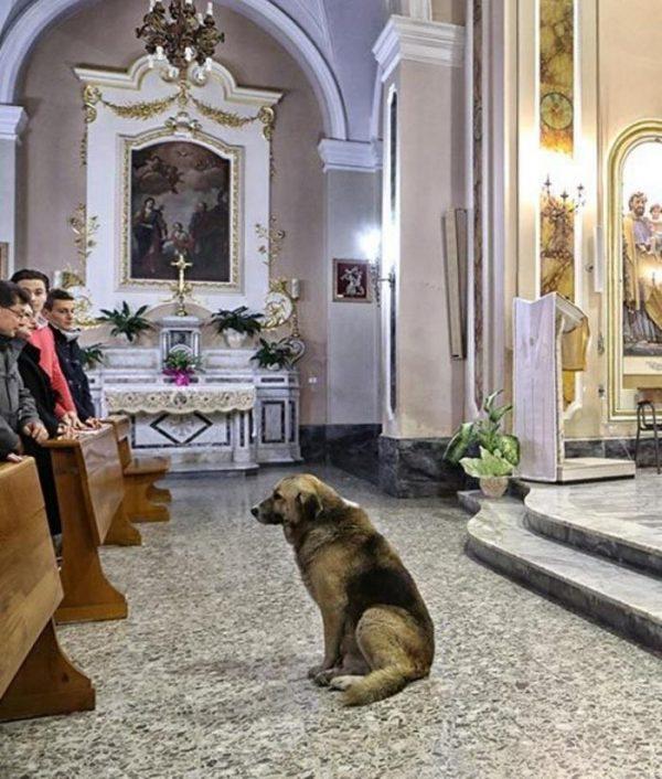 Собака в церкви
