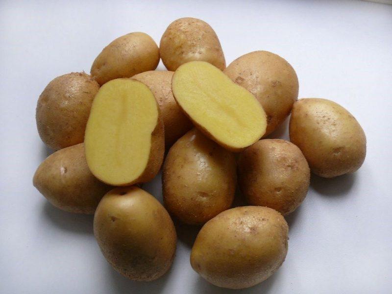 Картофель Сынок