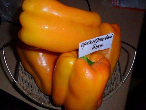 Перец сорта Оранжевый бык