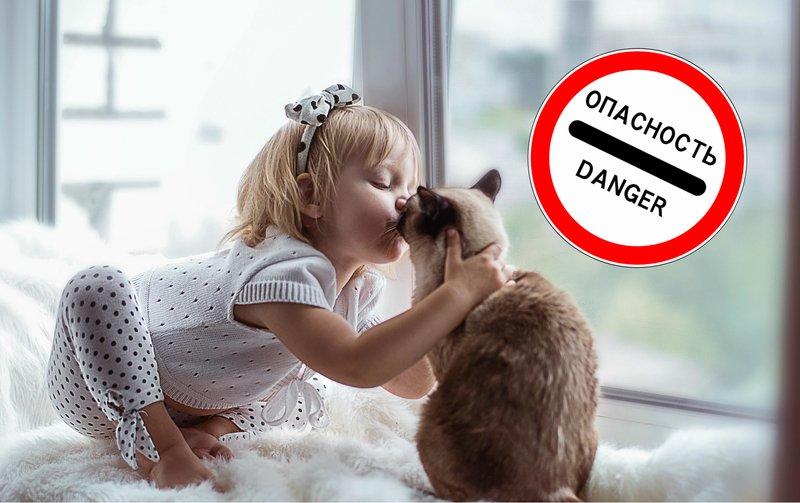 Ребенок целует котика