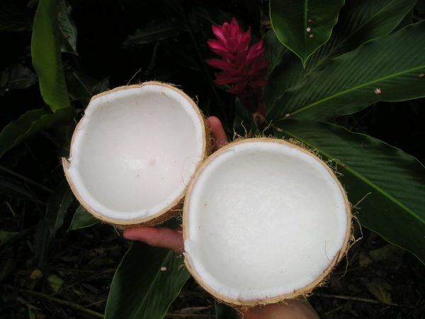 Мякоть кокоса