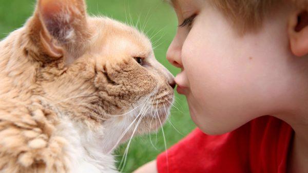 Мальчик целует кота в нос