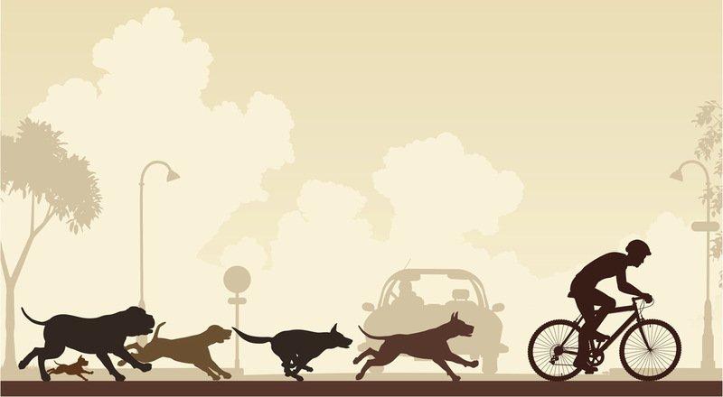 Собака лает на велосипедиста