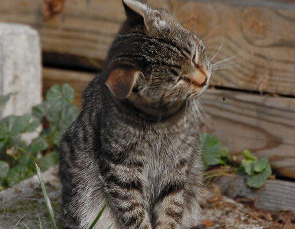 Кошка шевелит ушами