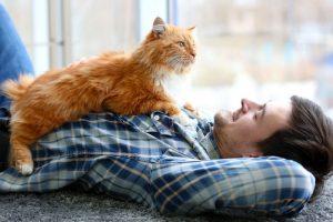 Кот лежит на человеке