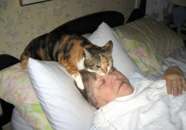 Домашняя питомица на голове у женщины