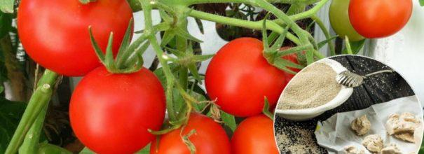 Урожай после дрожжевых подкормок