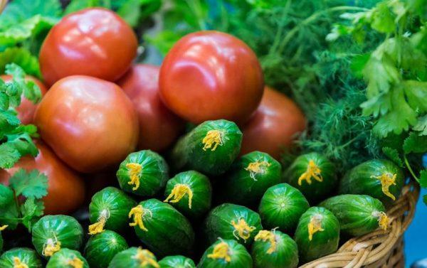 Урожай огурцов и томатов
