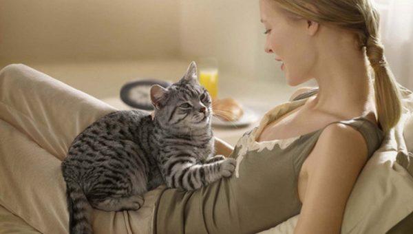 Кот на животе беременной женщины
