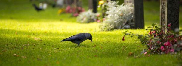 залитая солнцем полянка с надгробиями и птица