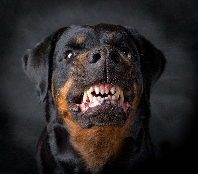 Собака смотрит в пустоту и рычит
