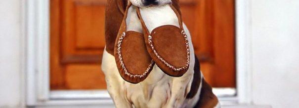 Собака с тапочками в зубах