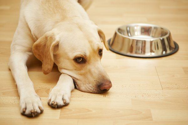 Собака с пустой миской