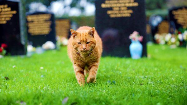 Рыжий кот на кладбище