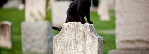 кошка на кладбище