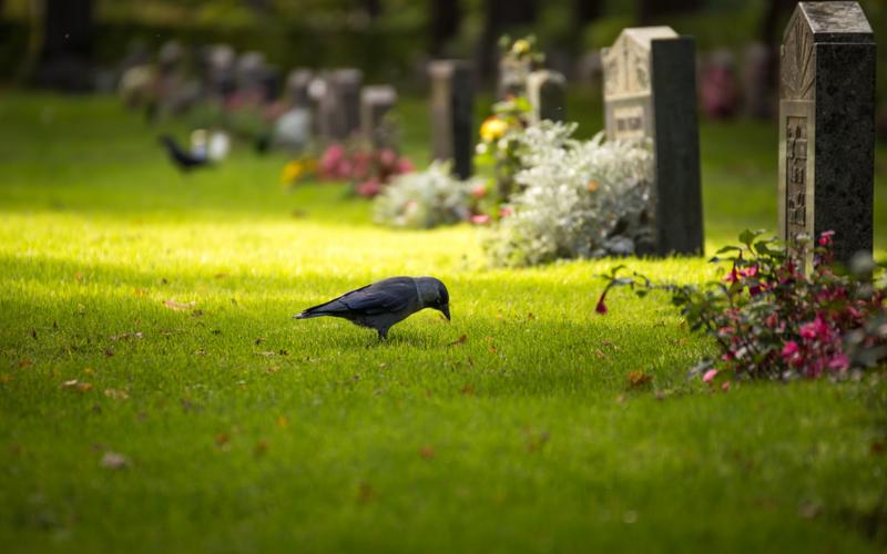 птица на кладбище