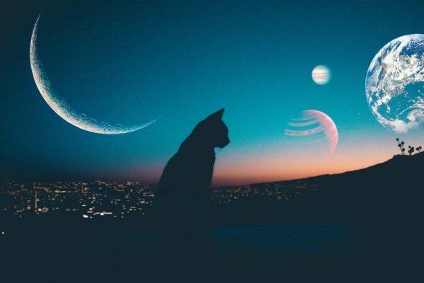 Кошка сидит на фоне луны