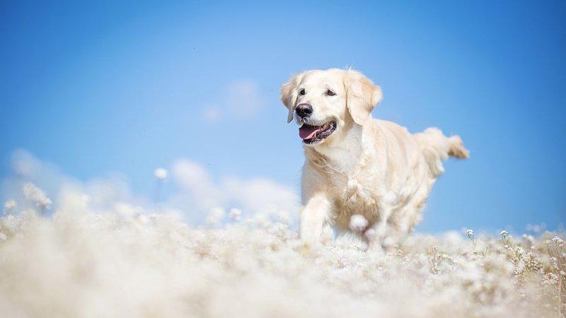 Есть ли у собак душа