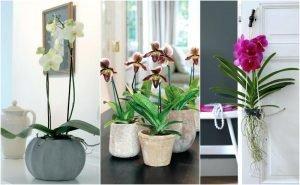 Орхидеи в доме