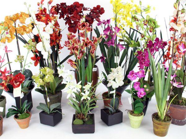 Разные виды и сорта орхидей