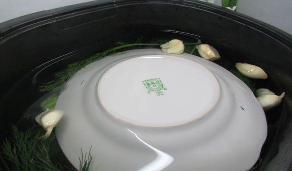 Прикрытая перевёрнутой тарелкой заготовка из огурцов с укропом и чесноком
